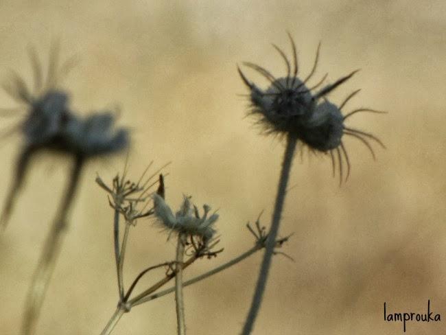 Η φωτογραφική μηχανή μου και φθινοπωρινές εικόνες