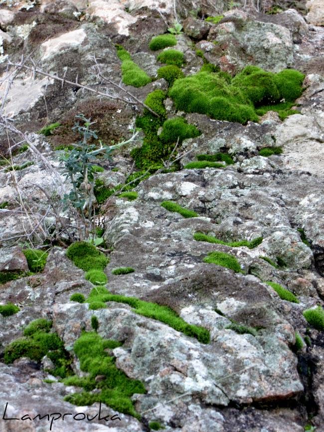 Βρύα στα βράχια.