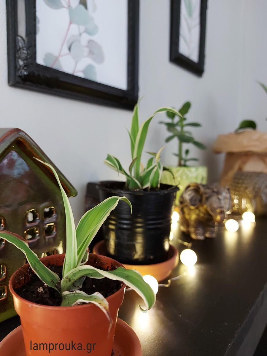 Διακόσμηση με φυτά  σε ράφι